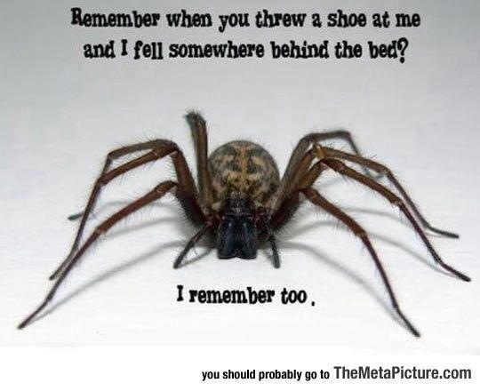 Remember when you threw 2 shoe at me and I fel] somewhere behind the bed?       1 remember too,  you should probadly go te TheMetaPicture.com