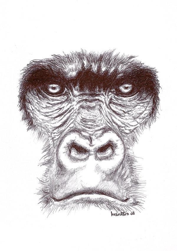 Gorillas Have Funerals Too