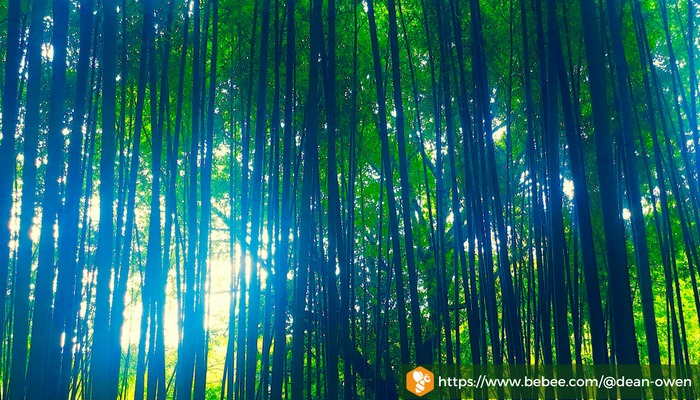 The Bamboo Mountains