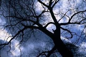 My Friend, the Tree