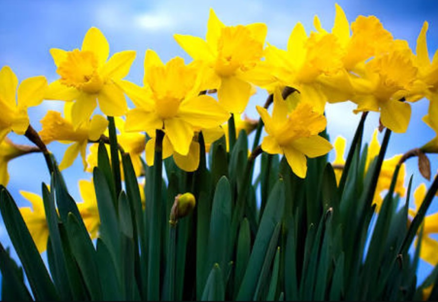 The Daffodils by Wordsworth. To be visible or not to be!natural cloud swirl fractals!