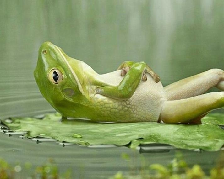 ¿Descansar?? // Resting?? (Español & English)