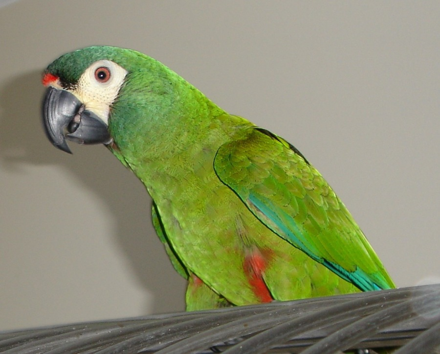 Help! I've Got Bird Brain!