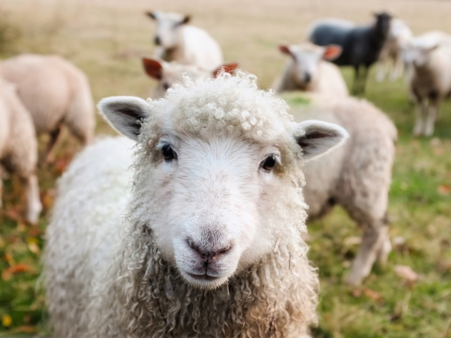 How to Not Follow the Herd and Still Get RespectAction Focused Express Coaching  - Get 12 months of unlimited coaching for just  $997!  Rende Con