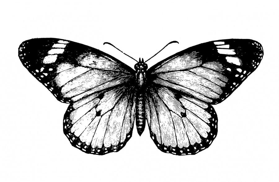 Fibonacci Variations on a Theme of Papiliones, Opus I