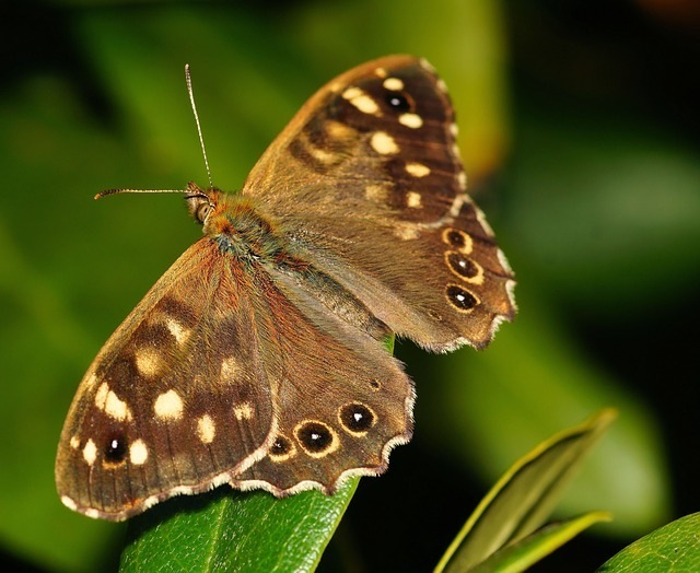 Managing Butterfly Effects