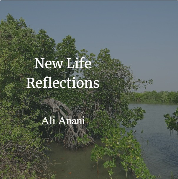 New Life Reflections