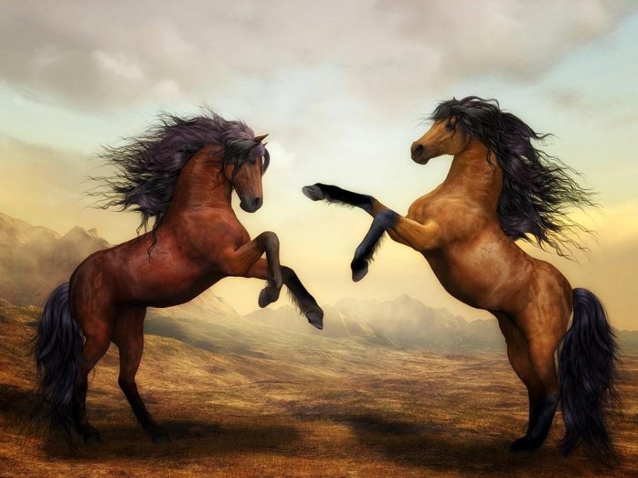 The Conflict Animals