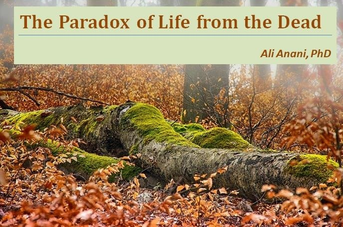 The Paradox of Life from the Dead