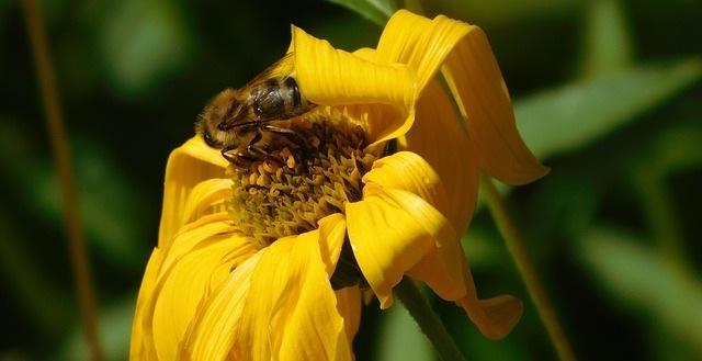 Trees Don't Produce Honey