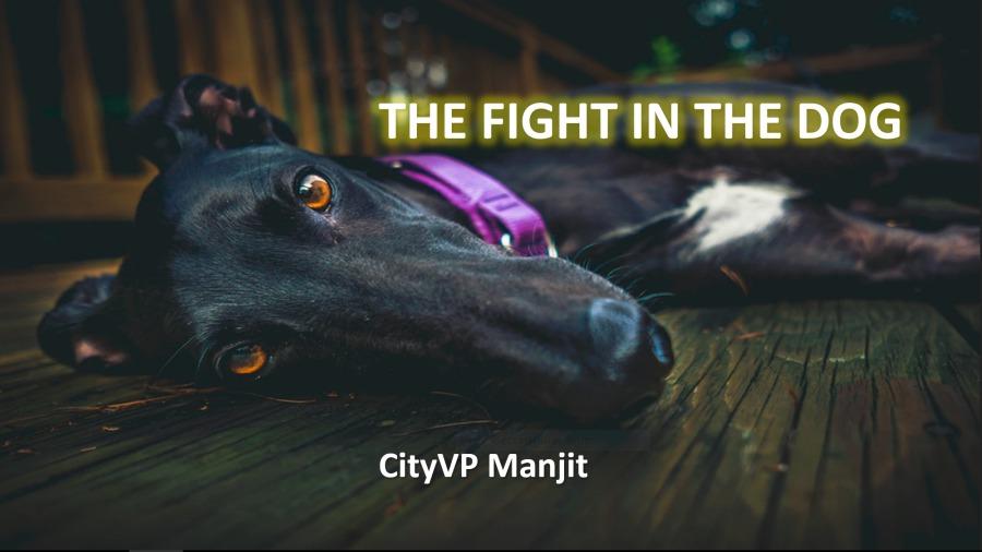 Li: FIGHT IN THE DOG E aN ' ¢ 4  ac  CityVP Manijit