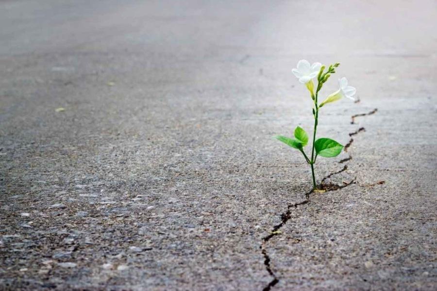 Hope springs...eternal