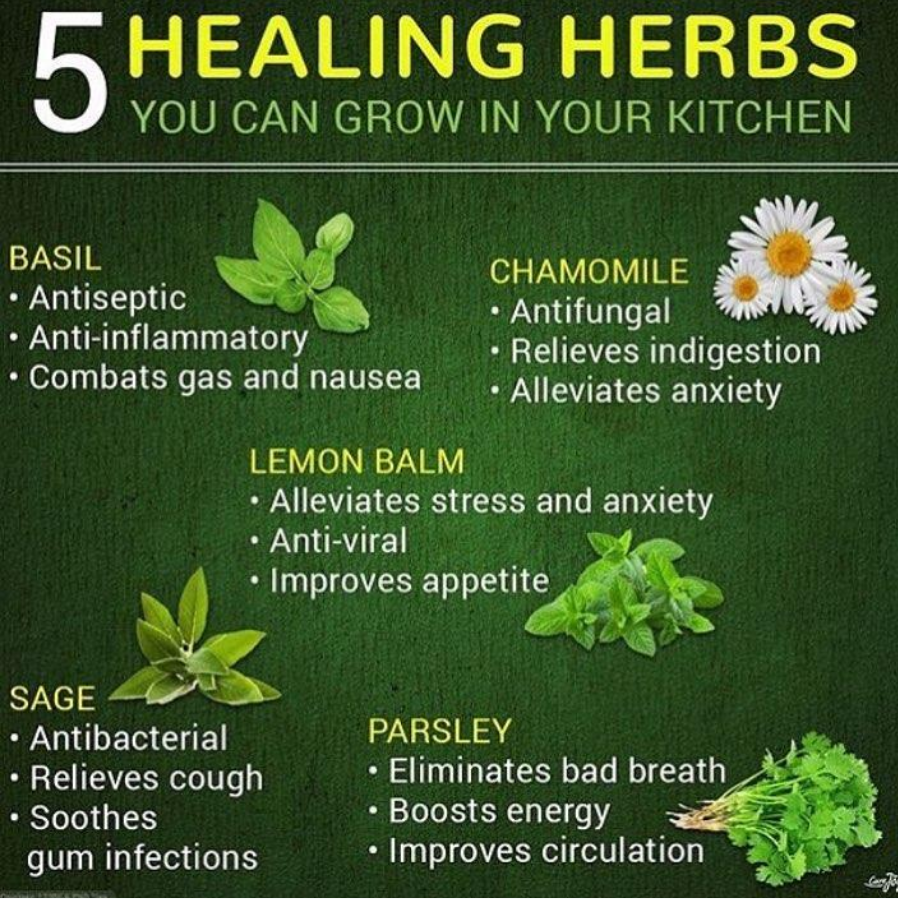 HEALING HERBS  YOU CAN GROW IN YOUR KITCHEN     BASIL CHAMOMILE a(R + Antifungal  * Anti-inflammatory + Relieves indigestion + Combats gas and nausea NP Ce ae  LEMON BALM + Alleviates stress and anxiety  QV-GRYTE] + Improves appetite By NT             1°] Xl + Antibacterial EASE + Relieves cough » Eliminates bad breath + Soothes + Boosts energy  IR CT CS [oY (YR {IN| ETE]