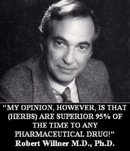 """""""MY OPINION, HOWEVER, IS THAT (HERBS) ARE SUPERIOR 95% OF THE TIME TO ANY PHARMACEUTICAL DRUG!"""" Robert Willner M.D., Ph.D."""