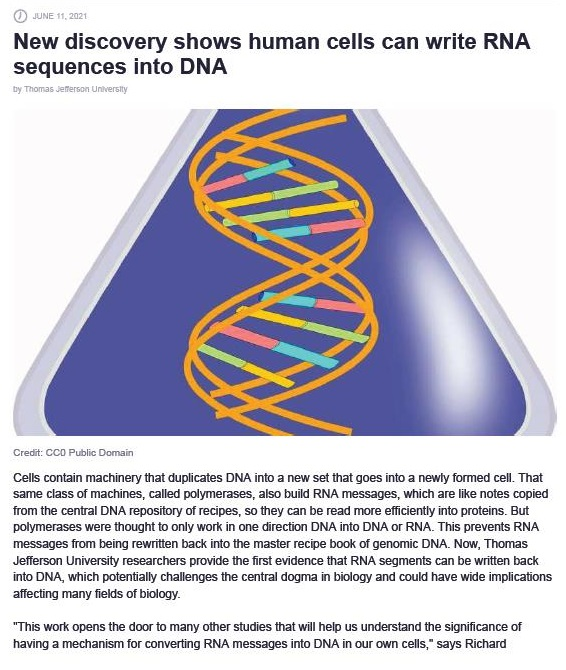 """New discovery shows human cells can write RNA sequences into DNA     Cot contin machinery Pal GLOSCes DNA 1 a now sel al Goos 10 3 nowsy lormed cod Tht Same Css Of machines, Caled foyer ase, #0 Dus RNA Message, whch arr Ike notes coped rom the Contra DNA secon of Ope. 50 Fury Can be iad more olionedly io protees. Bul Fotymnrzies weve ROUGH 10 orfy work 1 cre HTIon [INA mio DNA of RNA Tres prrverts HNA amg Form Deg rEwrBon back £30 Ta Pantie foce book of gece DNA. Now, Thames Jonon Linker uty roscarchion prove Tie st evidence hat HINA Scomonts Can bo ween tack 180 INA, whch pofentially Challenges The Contras Gog 1 Cakogy and Cou hve wide ICAO. '2ocsng many Sekt of tkogy.  """"Ths work pens the Gos 10 mary ofr S8A30S Tat wil help US UNSErand Far UOCAnCE of hiring 3 mechan for Comes tig NA Ferisages mio DNA © Out Own cols,"""" says Richard"""