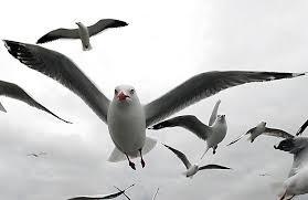 Seagulls As A Metaphor For Life