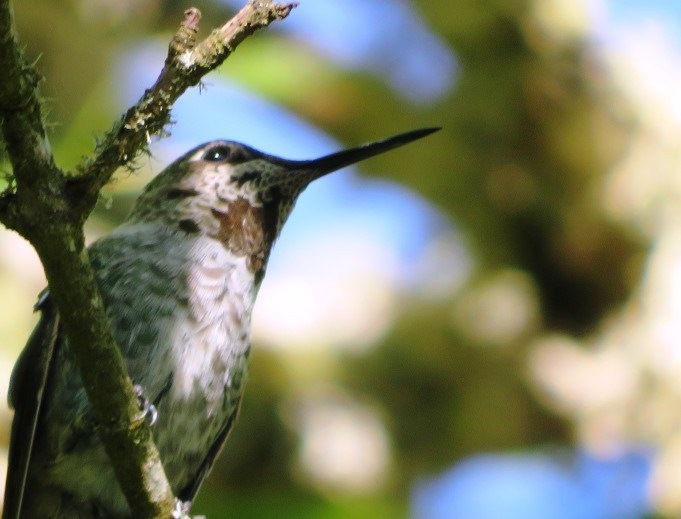 Parallels between corporate environments and hummingbirds