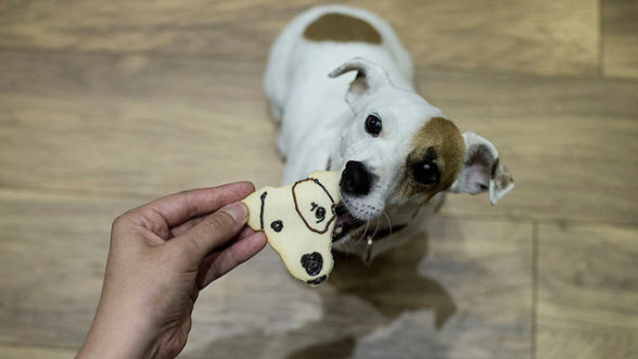 galletita_cara_perro