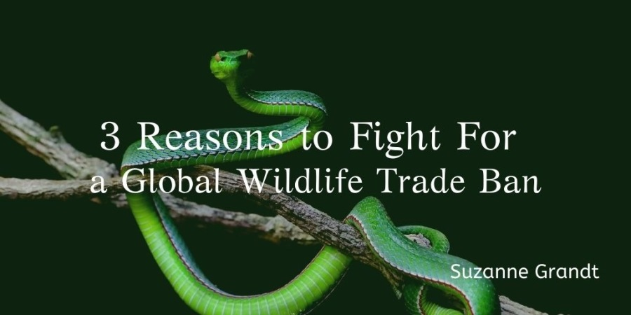 3 Reasons to Fight For a Global Wildlife Trade Ban