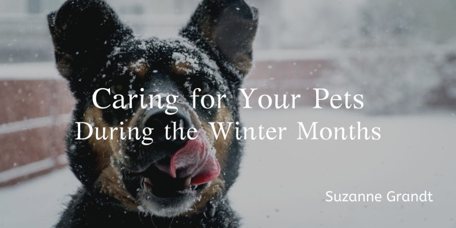 Caring for Your Pets During Winter Months