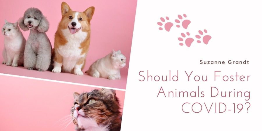 Suzanne Grandt  Should You Foster Animals During COVID-19?