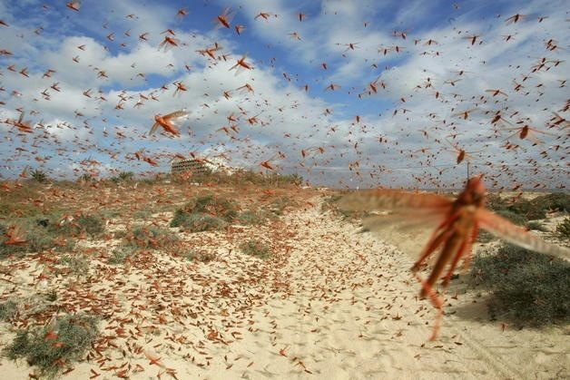 Bee Vs. Locust Mother Nature explains us why are we in crisis. Part 2.