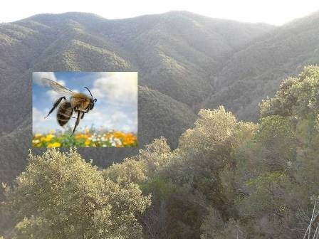 Bee Vs. Locust. Mother Nature explains us why are we in crisis. Part1.