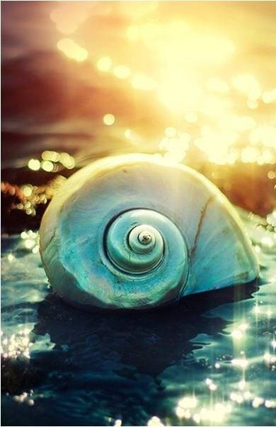 Similarities between Nautilus and a survival entrepreneur (English and Spanish)EE